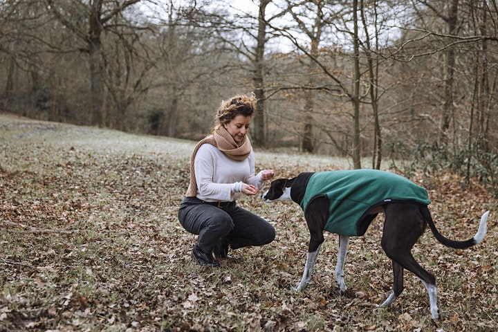 New Rescue Greyhound Behaviour Masterclass image