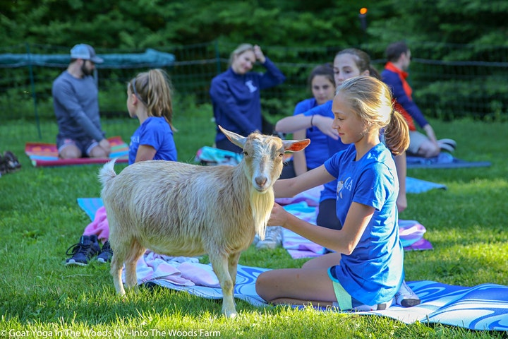 Goat Yoga In The Woods For Everyone image