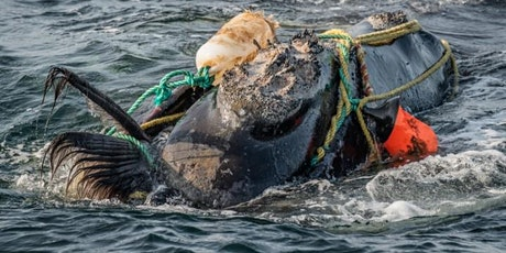 Right Whales Can't Wait: Protecting the North Atlantic Right Whale tickets
