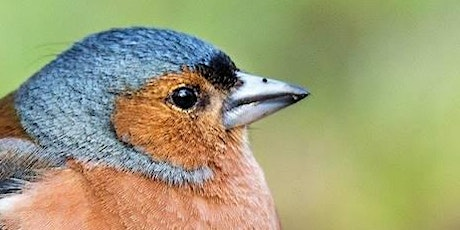 Finches of the UK - Digital Wildlife Walk tickets