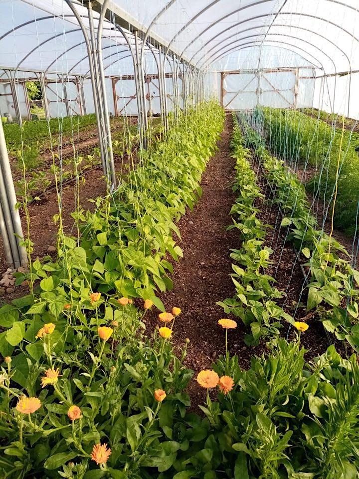 The Fold and Its Farm - A virtual tour of the organic farm. image