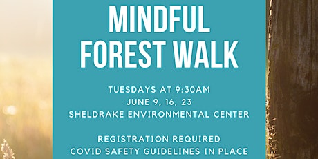 Mindful Forest Walk - June 9th tickets