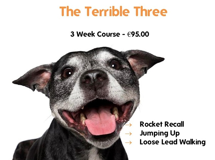 Terrible Three (Jumping Up, Recall & Leash Manners) image