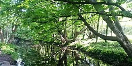 Yoga - Soft & Méditation sur herbe  suivi d'un Pic nic convivial billets
