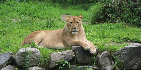 Wild Adventure Program: Teen Zoology tickets