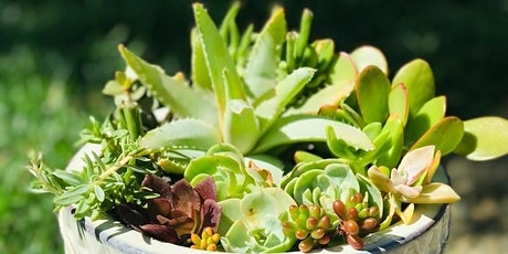 Custom Succulent Container Arrangement Class tickets