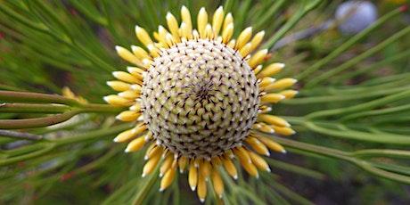 Bush Explorers - 'Wild Wednesday'- Wildflower walk - Frere's Crossing tickets