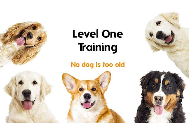 Level One Training, Sunday, Marlay Park image
