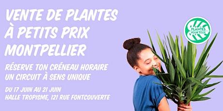 Vente de plantes à petits prix Montpellier billets