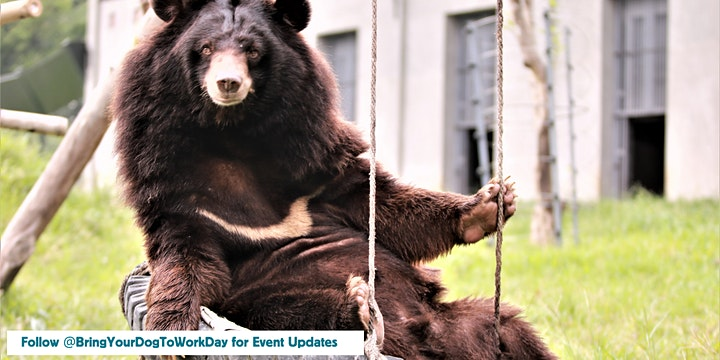 MOON BEAR EXPERIENCE STREAMED LIVE FROM ANIMALS ASIA SANCTUARY IN CHINA image