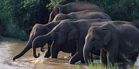 Human Elephant Conflict in Sri Lanka tickets