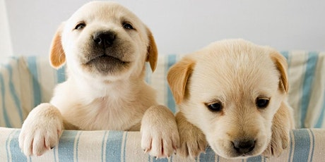 Puppy Socialization: Keys to Raising a Well-Adjusted Dog tickets