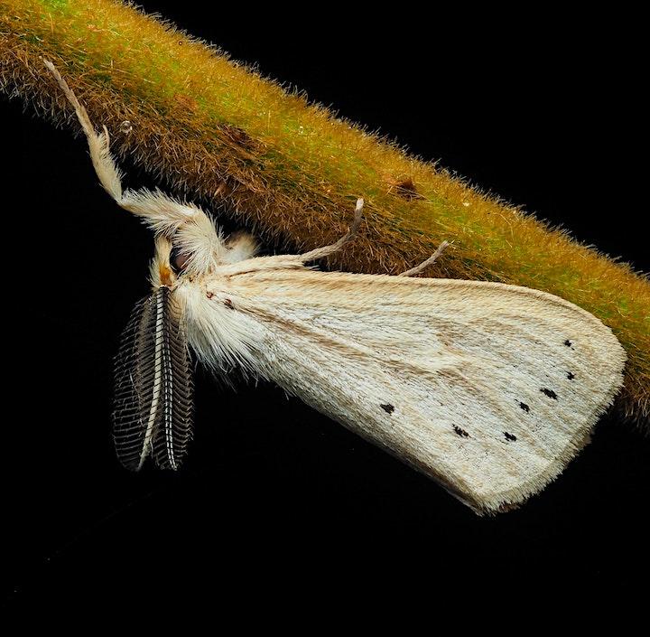 Tai Po Kau Night biodiversity excursion image
