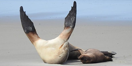 Pakake, New Zealand Sea Lion Adventure with Allie Simpson tickets