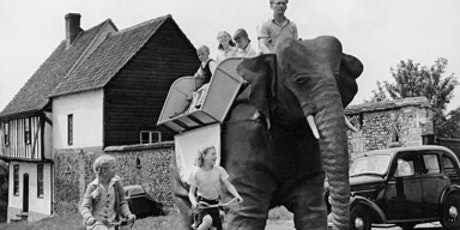 The Elephant in the Garden and other Beastly Encounters tickets