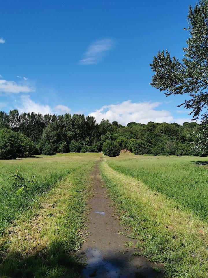 Mindful Nature Walk - Summer Solstice image