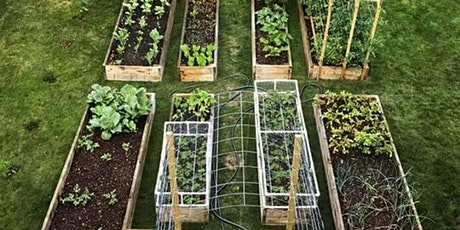 Vegetable Gardening Series for Beginners Session 2:  Planting Basics tickets