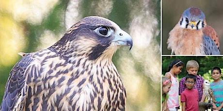 Mountsberg Raptors: Birds of Prey tickets