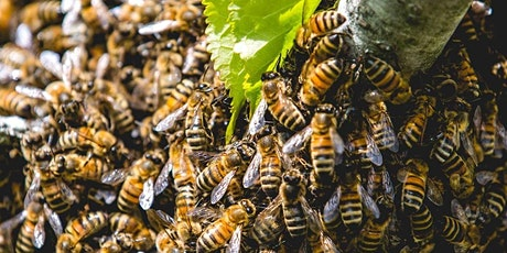 Advanced Beekeeping Course tickets