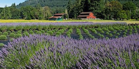 McKenzie River Lavender Bloom 2020 tickets
