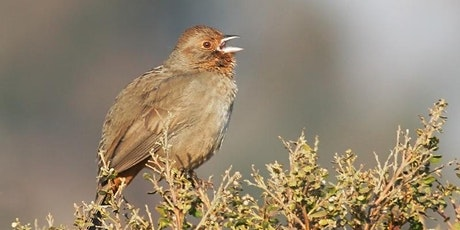 Birds of Bear Creek Redwoods tickets