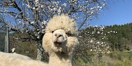 Meet My Alpaca: The Experience biglietti