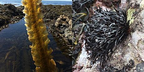 Seaweed School  - Sugar kelp and Grape Pip Weed tickets