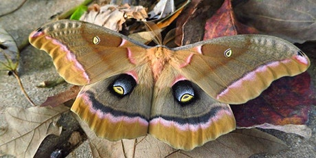 Magnificent Moths & Caterpillars tickets