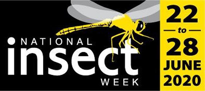 Watch Moths (to a Flame!) : National Insect Week image