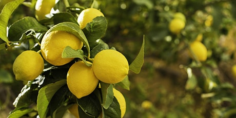 Book Discussion - The Lemon Tree - New Narratives Community tickets