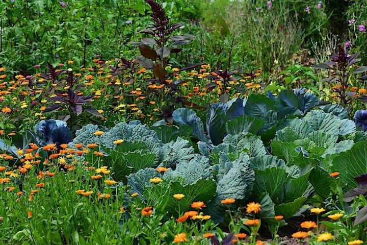 Gardening Basics by Eco Centro image