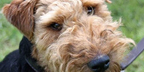 Dog Training - Skills and Drills tickets