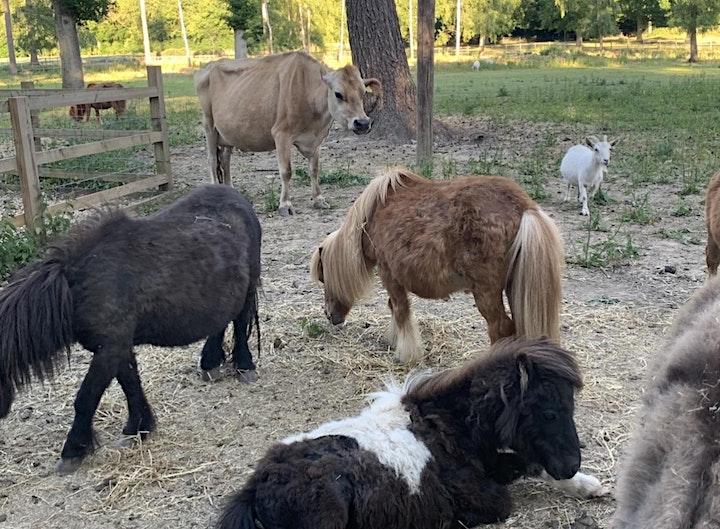 Alpaca Walk and Picnic in the Paddock - Jul-Sep image
