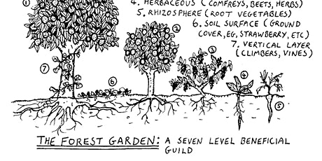 Forest garden in your backyard - a primer to permaculture: Workshop and Q&A tickets