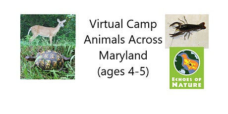 Virtual Camp: Animals Across Maryland (ages 4-5) tickets