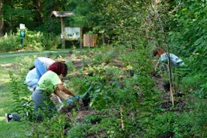 Volunteer Service Days image