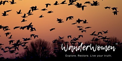 Wild Geese Wander