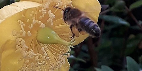 Bee conservation & natural bee keeping tickets