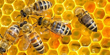 AGM 2020   Bee Industry Council of WA / BICWA tickets