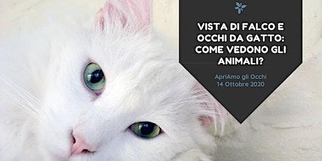 Vista di falco e occhi da gatto: come vedono gli animali? biglietti