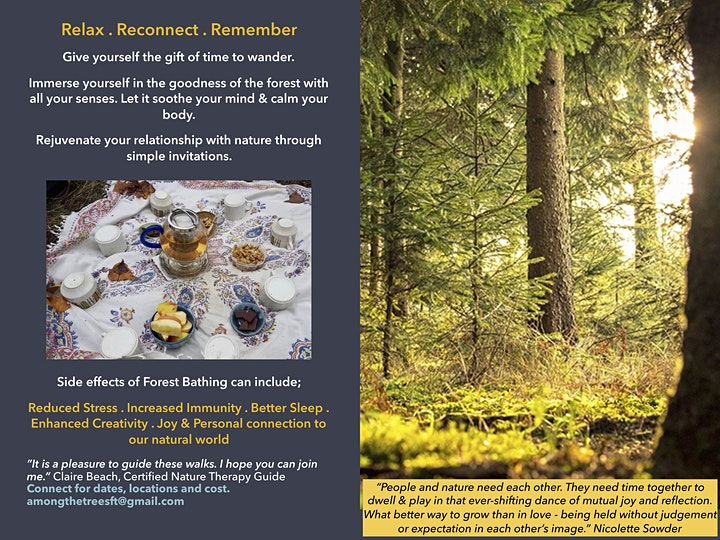 Once Around the Sun - Series of Forest Therapy Walks image