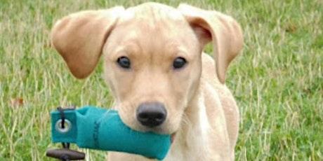 Gun Dog Training tickets