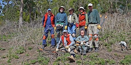 Friends of Knocklofty Bushcare Volunteer Activity - July 2020 tickets