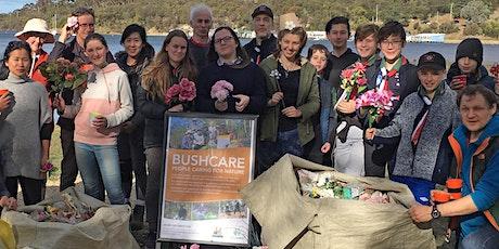 Cornelian Bay Bushcare Volunteer Activity - July 2020 tickets