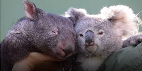 Moonlit Sanctuary - Koala Edition!! tickets