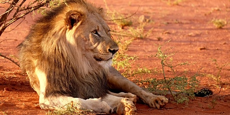 Online safari show for kids at Nairobi National Park, Kenia, Africa tickets