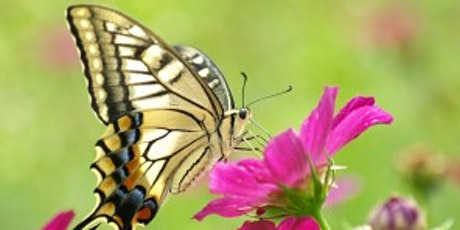Kids - Build a butterfly house.  £35,  Age 8-16 tickets