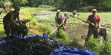 Water Chestnut Removal at Blue Mountain Reservation tickets