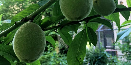 Open Orchard School: Fruit Harvesting, Recipes and Preservation Techniques tickets
