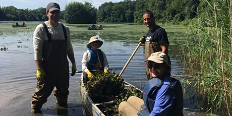 Water Chestnut Removal at Twin Lakes Park tickets